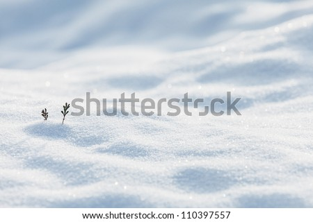Two small pine twigs showing on the white snow in winter - stock photo