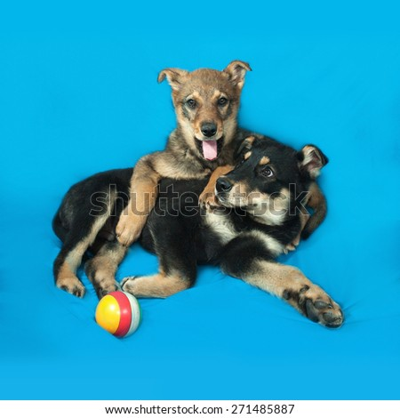 Two small puppy lying on blue background - stock photo