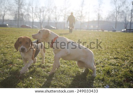 Two small puppy playing running on green field - stock photo