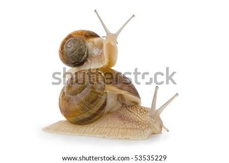 Two snail, on white background. - stock photo
