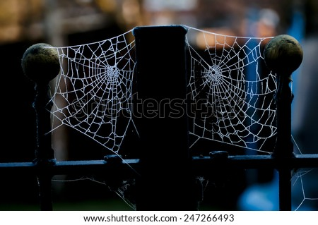 Two spiders' webs on fence posts covered by ice crystals from frozen dew.  Backlit in the early morning glowing against a dark background. - stock photo