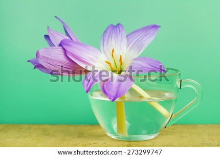 two spring flowers in a cup  - stock photo