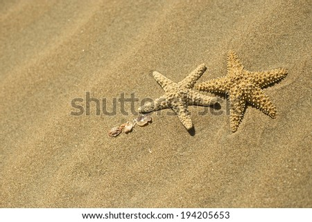 two starfish in the sand - stock photo