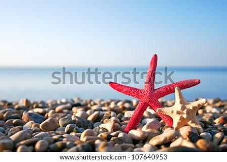 Two starfish on the beach - stock photo