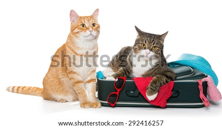Two striped cat lying with a suitcase for a holiday trip. - stock photo