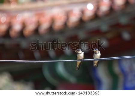 Two swallow birds on wire in summer  - stock photo