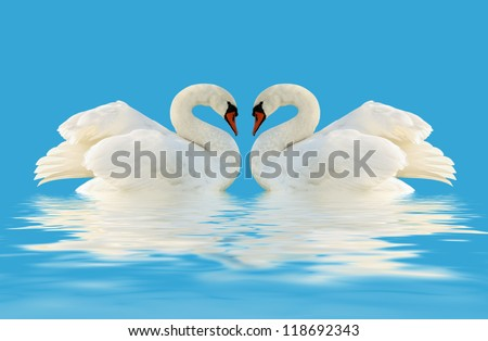 Two swans on the blue surface. - stock photo