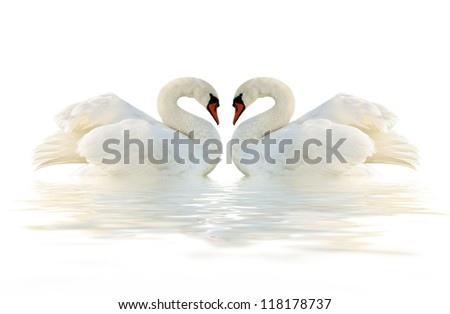 Two swans on the white surface. - stock photo
