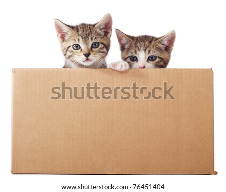 Two tabby kittens peeking out of the box - stock photo
