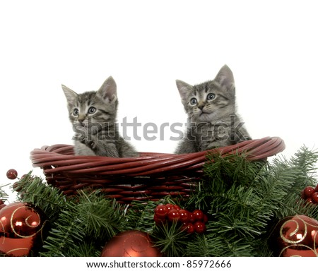 Two tabby kittens sitting inside of red basket with christmas ornaments on white background - stock photo