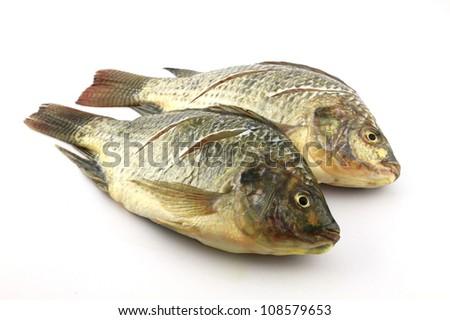 Two Tilapia  on white background - stock photo