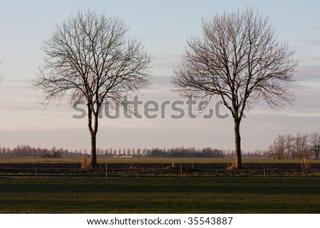 Two trees - stock photo