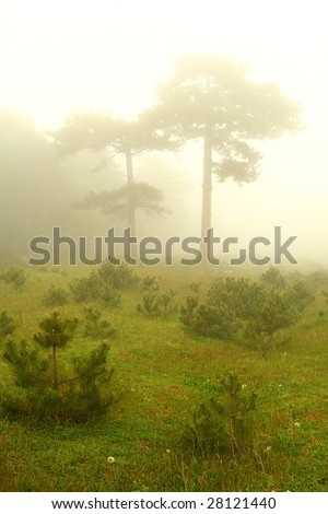 Two trees in fog - stock photo