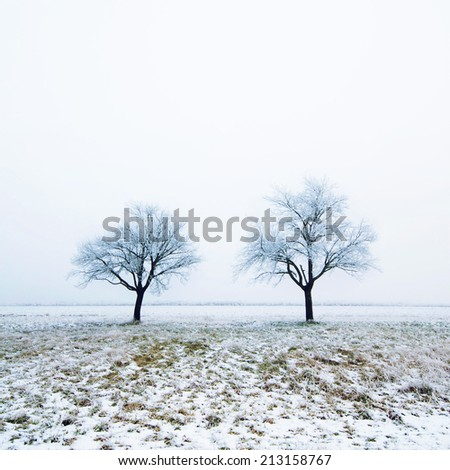 Two trees on snow covered field - stock photo