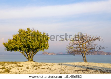 Two trees on the beach - stock photo