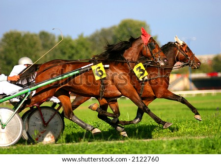 Two trotting horses - stock photo