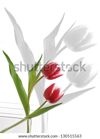 Two Tulips - stock photo