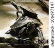 two turtle - stock photo