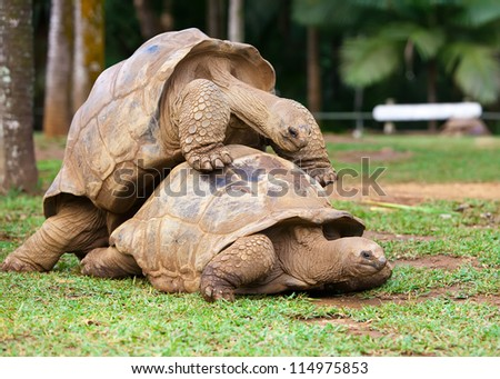 two turtles sympathizing each other - stock photo