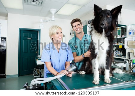 Two veterinarians preparing a dog for surgery. - stock photo