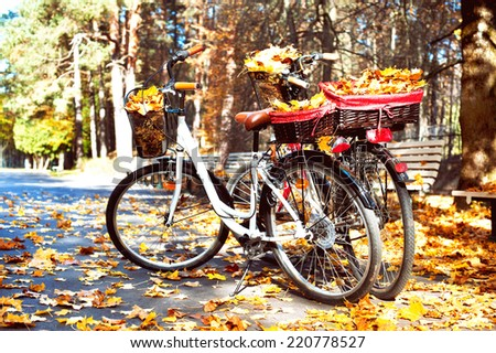 Two walking bicycles in autumn park with yellow tree leaves in basket. Outdoors. - stock photo