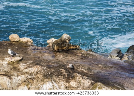 Two wet sea lions sunbathing and interacting, and two seagulls on a cliff by the ocean in La Jolla cove, San Diego, California - stock photo