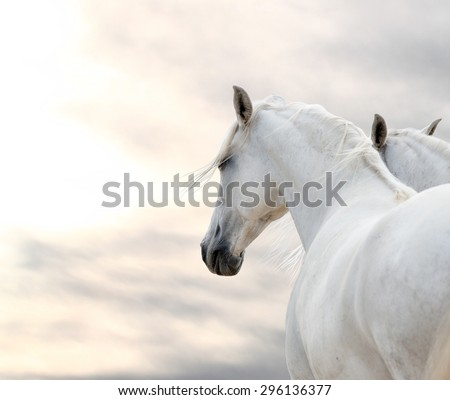 two white horses at weather day - stock photo