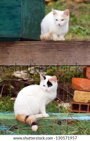 Two white kittens sitting above each other - stock photo