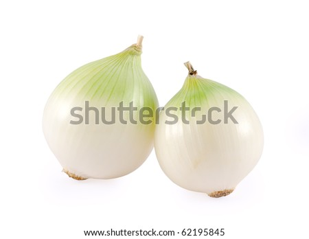 two white onion bulb isolated on white background - stock photo