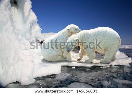 Two white polar bears on ice floes - stock photo