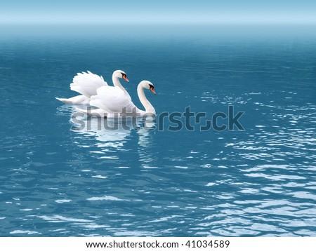 two white swan - stock photo