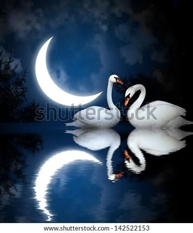 Two white swans on black background - stock photo
