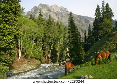 Two wild horses grazing beside a river that flows down a mountain in Kashmir. - stock photo