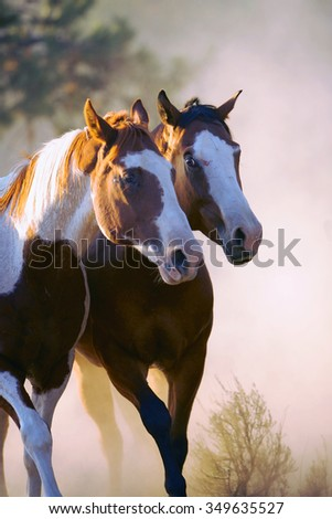 Two wild horses standing in sunlight - stock photo