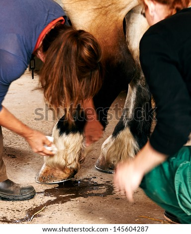 Two woman nursering a horse - stock photo