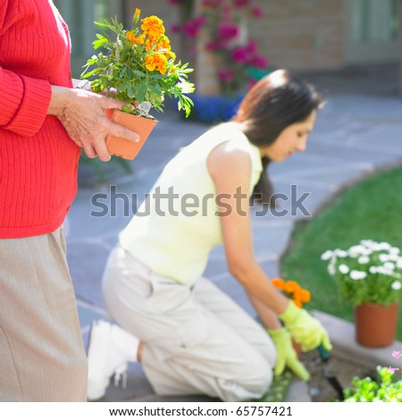 Two women planting flowers - stock photo