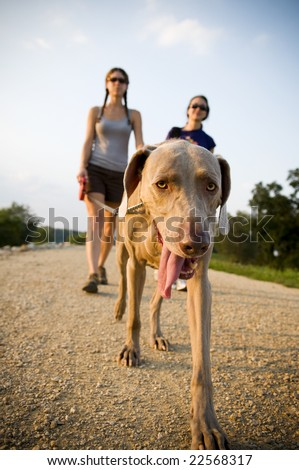 two women walking a dog - stock photo