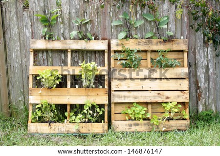 Two wooden pallets, modified slightly to grow vegetable plants. - stock photo