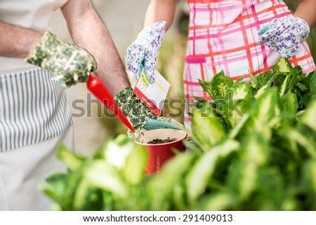 Two workers in a greenhouse sow flowers in a red flowerpot. - stock photo