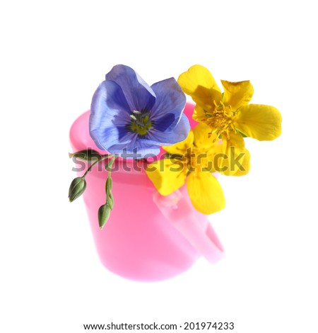 Two yellow flower and one blue flower flax little pink bucket isolated on white background - stock photo