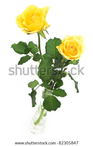 Two yellow roses in vase on white background - stock photo