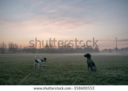 Two young dog on morning walk, foggy sunrise - stock photo