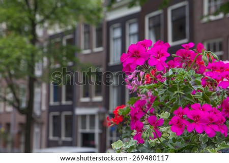 Typical  houses in Amsterdam. In the foreground are summer flowers as a decoration of bridge. All potential trademarks are removed. - stock photo