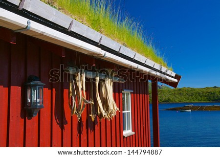 Typical norwegian rorbu hut with sod roof and drying stock fish on Lofoten islands - stock photo