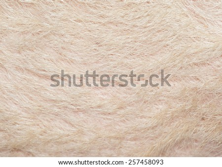 Typical pink pig skin, close-up. - stock photo