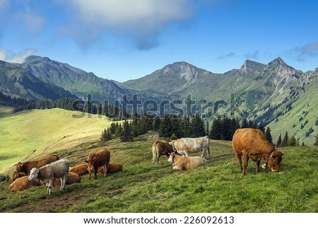 typical rural landscape in the Swiss Alps with grazing cows - stock photo