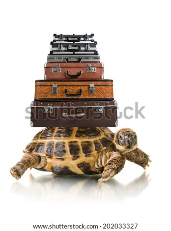 typical tortoise with big heap suitcase on white background; isolated, close up - stock photo