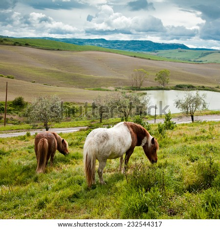 Typical Tuscan landscape in Italy with horses - stock photo