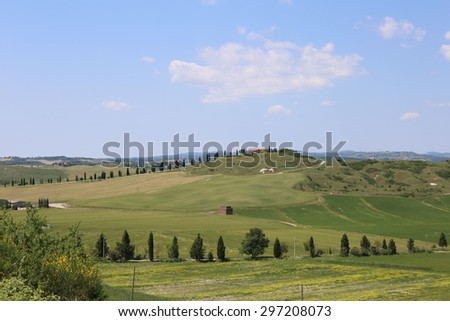 Typical Tuscan rural scene. Gently rolling hills covered in arable crops and Poplar Trees lining  tracks to hilltop farms. An idyllic landscape of Italian countryside. - stock photo