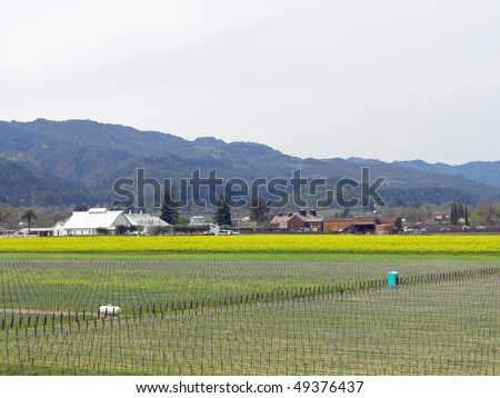 Typical view of Napa Valley in the spring, with yellow mustard in the vineyards - stock photo
